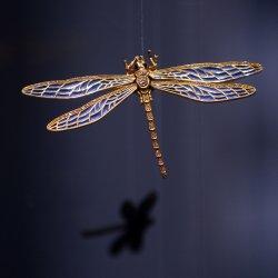 Dragonfly - lyrics